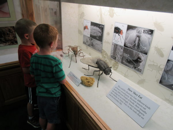 There were some new insect displays to learn from.