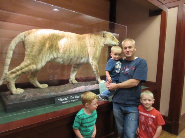 Shasta the liger is still part of the Bean Museum.