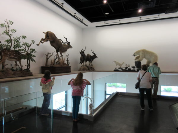 """Upstairs has lots of animals """"in action."""" We love the natural light in this area."""