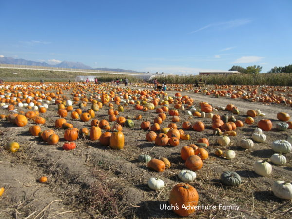 There were many different kinds of pumpkins. fall activities in Utah:
