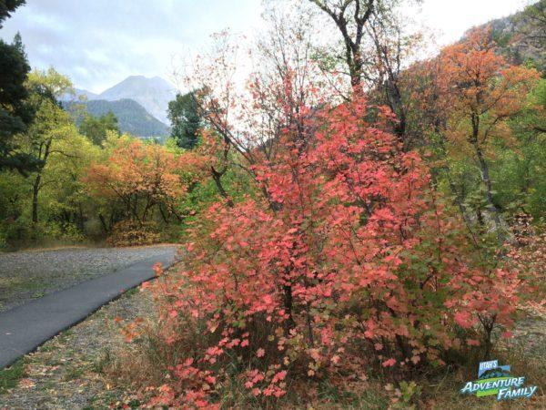 fall-drives-alpine-loop-2