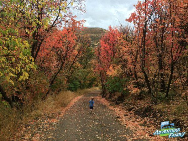 fall-drives-provo-canyon-3