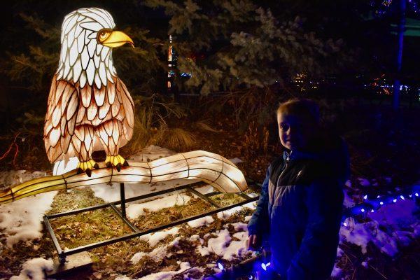 Bald Eagle light at Hogle Zoo