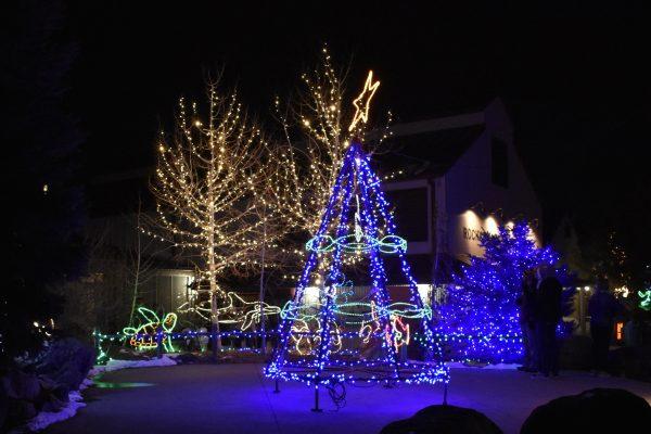 Christmas tree and lights at the zoo