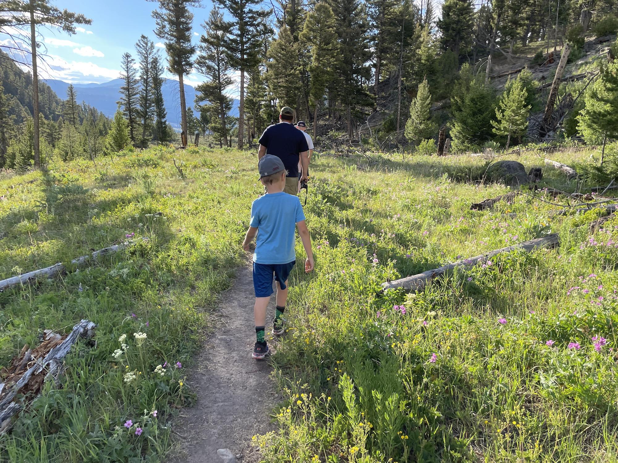 Wildflowers along the trail to undine falls yellowstone