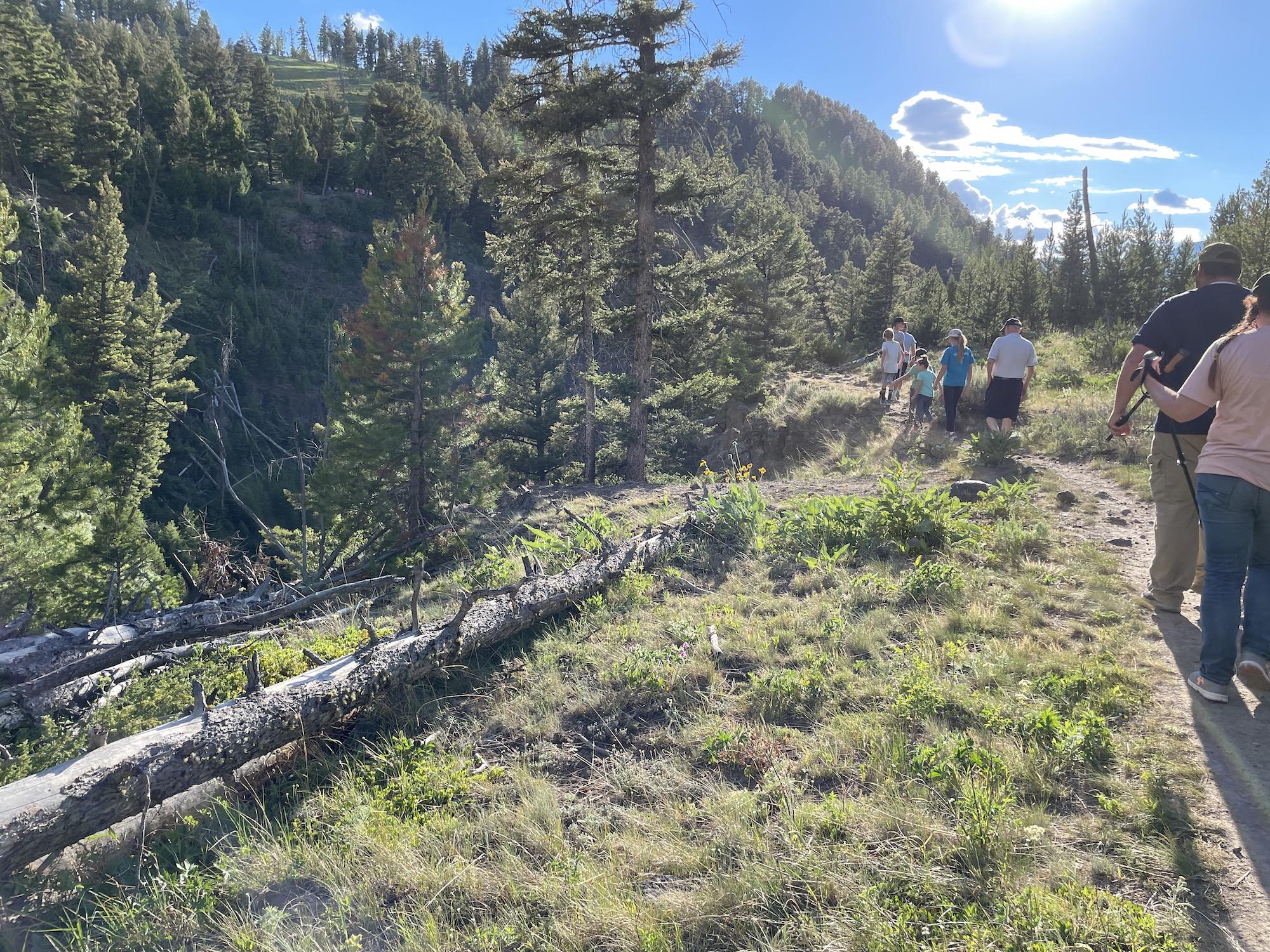 Trail leading to undine falls yellowstone
