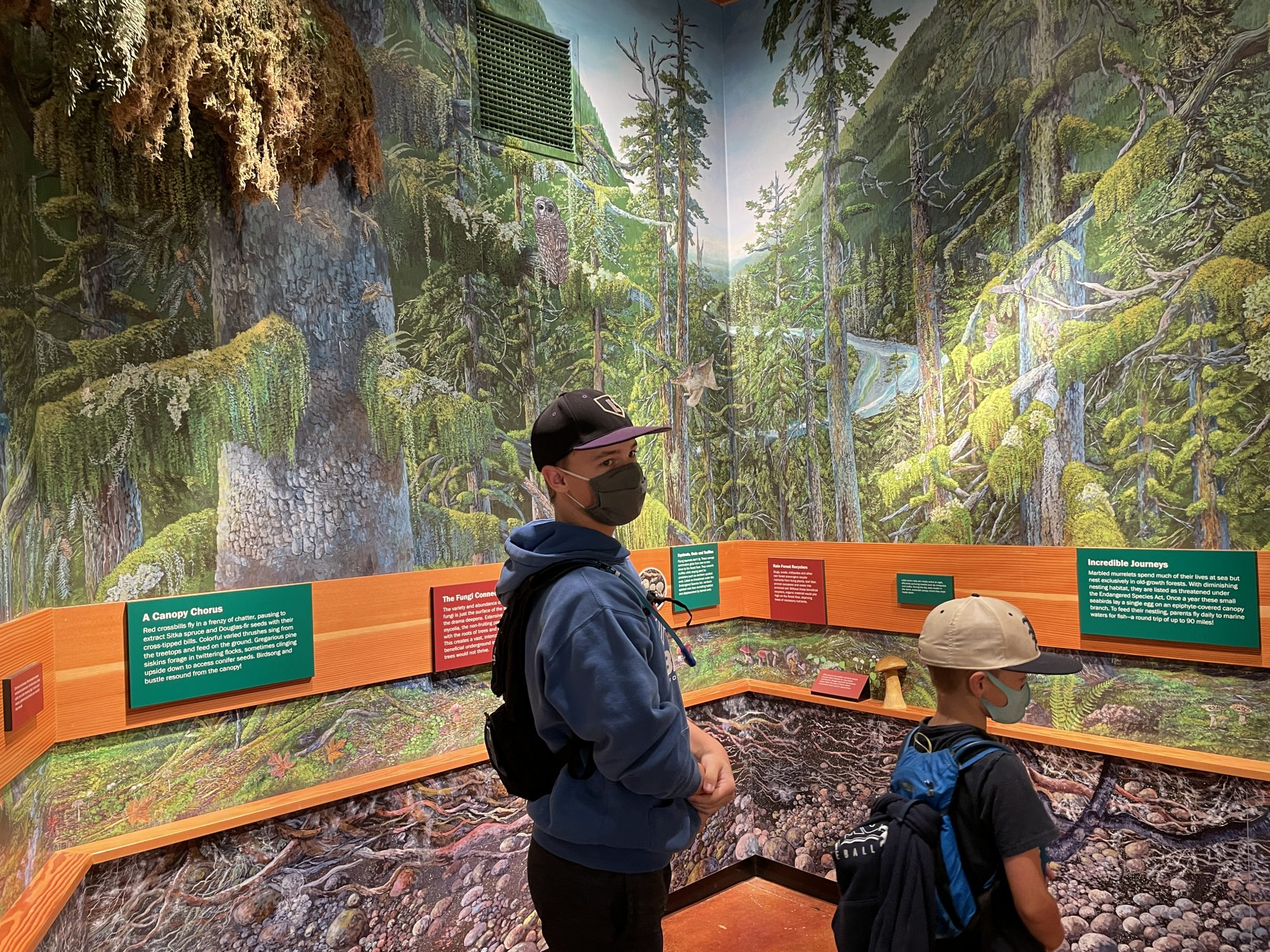 The Visitor Center at hoh rainforest olympic national park
